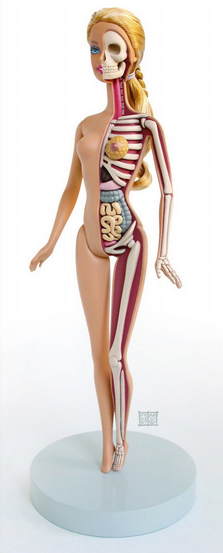 Barbie has guts, literally!